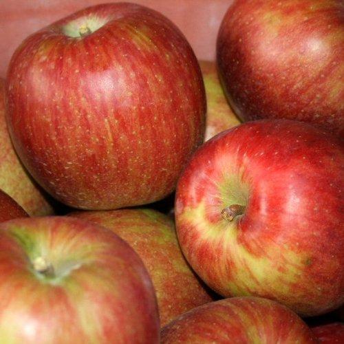 長野県産りんご サンつがる Cランク (家庭用) 10kg (24玉~40玉) 訳あり(キズ・色ムラ・割れなど)