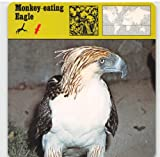 Monkey-Eating Eagle 1975 Editions Rencontre Animals Card #155 (VG+)