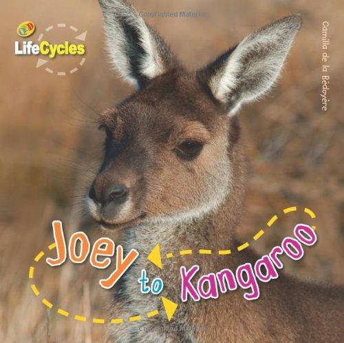 Joey to Kangaroo (Lifecycles)