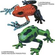 立体図鑑リアルフィギュアボックス フロッグ (カエル)