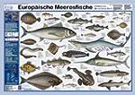 Europ�ische Meeresfische