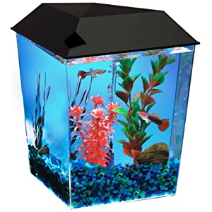 Buy fish tanks for sale and save big available at low for Betta fish for sale at walmart