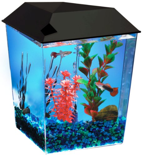 One Gallon Tank Aquarium System