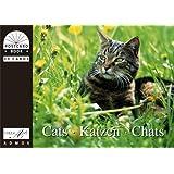 """Katzen /Cats /Chats: Postkartenbuchvon """"Wilhelm A Spindelndreier"""""""