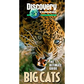 Big Cats : The Ultimate