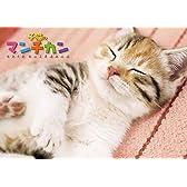 子猫のマンチカン 2015カレンダー