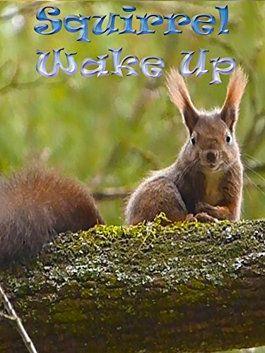 Clip: Squirrel Wake Up on Amazon Prime Instant Video UK