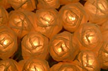 THE FAIRY LIGHT COMPANY - Producto para decoración floral