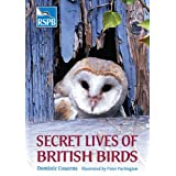 Secret Lives of British Birds (Rspb)by Dominic Couzens