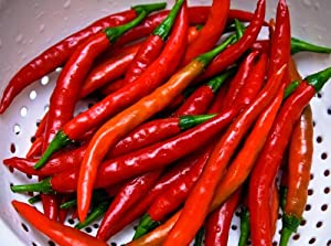 Long Thin Cayenne Pepper 4 Plants - Hot!