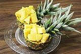 沖縄県産フルーツ 宮古島産ハウスパイナップル2玉(約3kg?4kg) ランキングお取り寄せ
