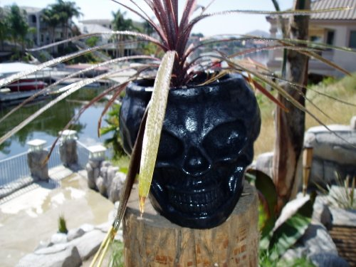 Skull Tiki Planter {Black}