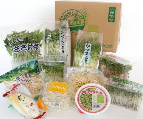 おためしスプラウト11品野菜セット 【国産チコリ入り】