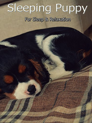 Sleeping Puppy For Sleep & Relaxation