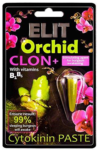 elit-orchid-clon-cytokinin-cloning-paste-stimulating-agent-for-sleeping-burgeon