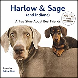 harlow & sage indiana a true story about best friends