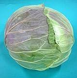 国産野菜 キャベツ 約1.4kg