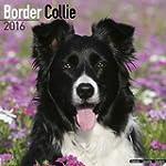 Border Collie Calendar 2016 (Square)