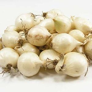 Amazon.com: White Ebenezer Onion Bulbs Organic 1/2 Pound Onion Sets