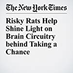 Risky Rats Help Shine Light on Brain Circuitry behind Taking a Chance | Pam Belluck