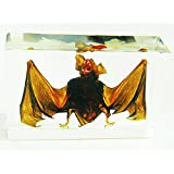 Real Bat in Acrylic Block - Extra Large