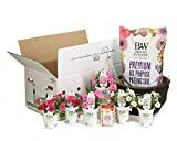 Proven-Winners-DIY-Premium-Hanging-Basket-Kit-Above-Beyond-Combination-with-15-Container