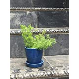 The Garden Store Ceramic Glazed Pot Small-blue