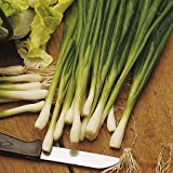 Spring Onion - white Lisbon Allium Cepa - 1000 Seeds