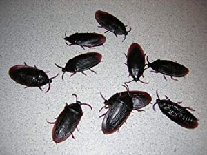 144 Fake Rubber Cockroaches