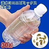 (生餌)淡水ヨコエビミックス(30匹) 本州・四国限定[生体]