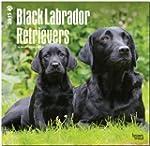 Black Labrador Retrievers 2015 - Schw...