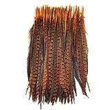 KOLIGHT Set of 100pcs Natural Dyed Pheasant Tails Feathers 14-16 Inch DIY Decoration (Orange)