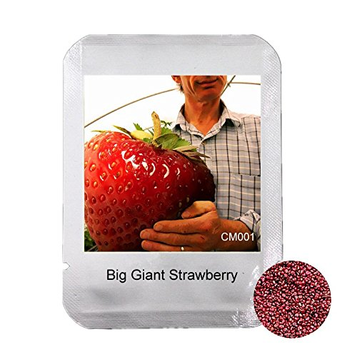 200-pcs-rare-big-giant-strawberry-seeds-extra-large-sweet-delicious-four-season-fruit-seeds-
