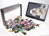 Photo Jigsaw Puzzle of Dog Toy Poodle fr...