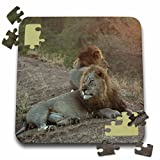 Angelique Cajam Big Cat Safari - Lion king on a rode - 10x10 Inch Puzzle (pzl_26824_2)
