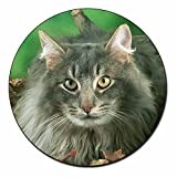 Blue Fluffy Cats Fridge Magnet Stocking Filler, Ref:AC-55FM
