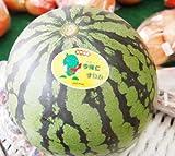 沖縄県産フルーツ 今帰仁スイカMサイズ1玉(約2.5kg)