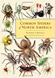 img - for Common Spiders of North America book / textbook / text book