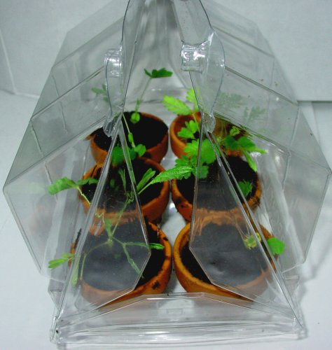 TickleMe Plant Greenhouse