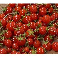 Sweet Million Cherry Tomato 4 Live Plants - Up to 2000 Cherries