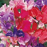 Suttons Seeds 134250 Spencer Special Mix Sweet Pea Seed