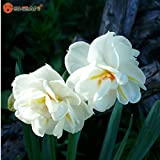 Bonsai Seeds Of Aquatic Plants Double Petals Pink Daffodils Seed For Home Garden 100 Particles / Lot Flower Seeds...