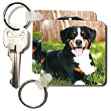Appenzeller Mountain Dog - Set Of 6 Key Chains