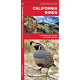 California Birds: A Folding Pocket Guide to Familiar Species (Pocket Naturalist Guide Series)