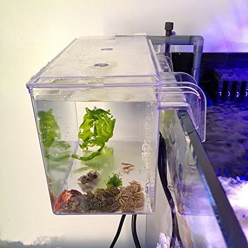 Aquarium Breeding Tank