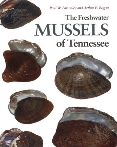 Freshwater Mussels Tennessee