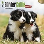 Border Collie Puppies 2016 Square 12x...