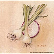 Onions Art Poster PRINT Deb Collins 6x6