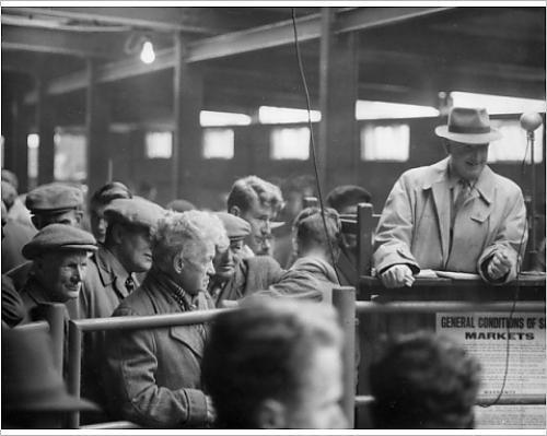 Newton Abbott Livestock Market