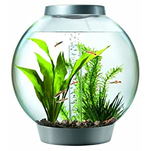 Check Glass Aquarium
